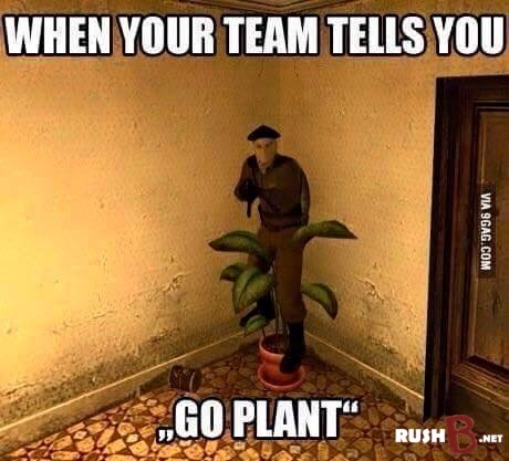 when your team tells you go plant